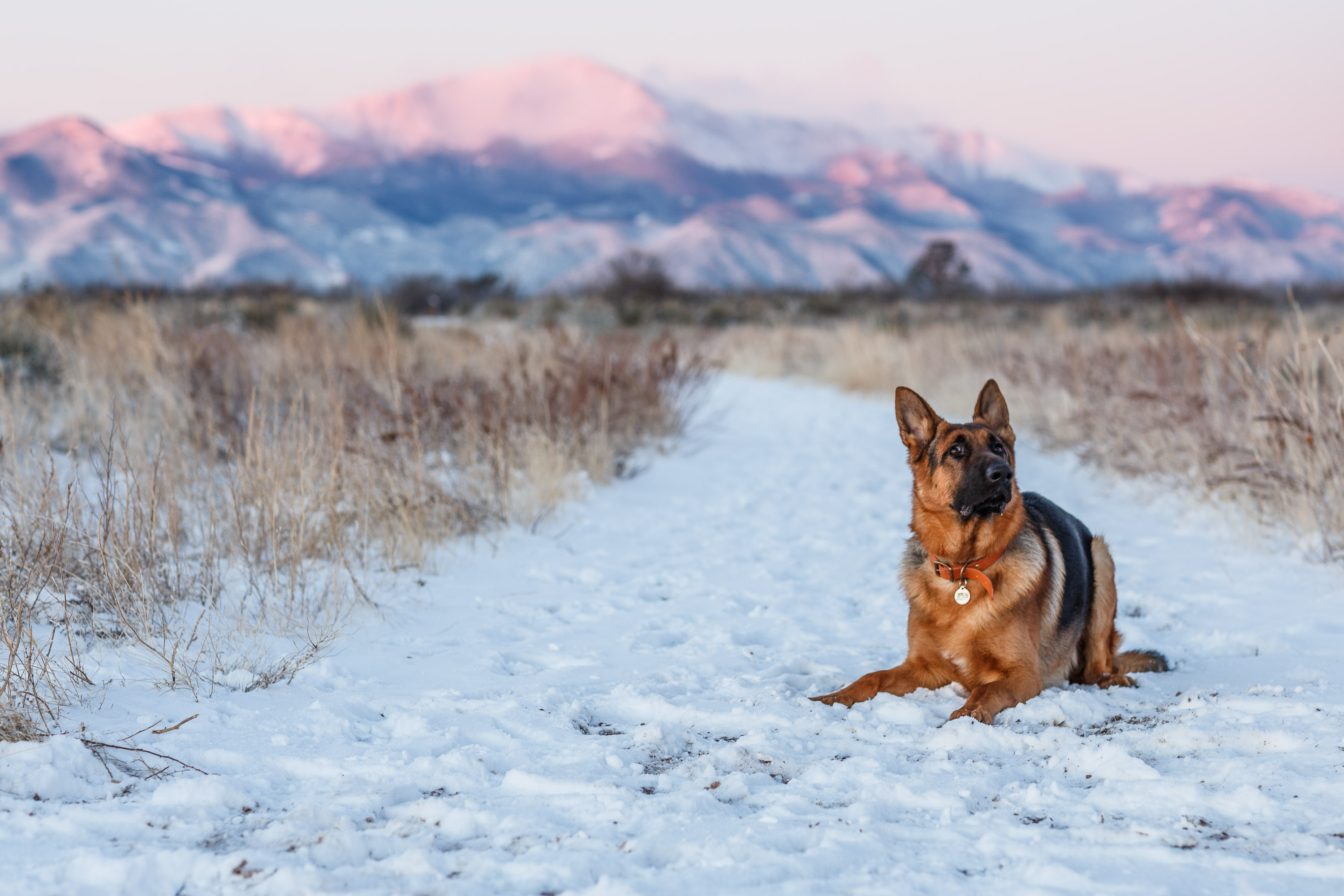 Dog sitting in the snow with Pikes Peak in the background