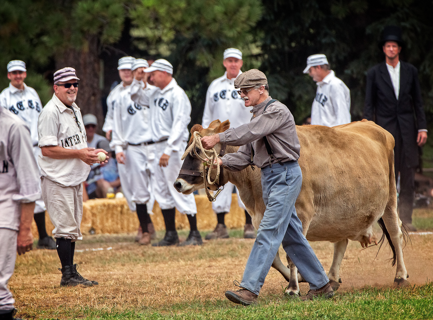 Baseball team waiting for cow to be lead off the field