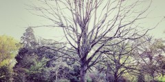 Tree Problems - Tree with no leaves