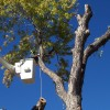 Trimming a tree from a bucket truck