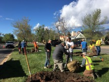 Arbor Day and Median Plantings 2019